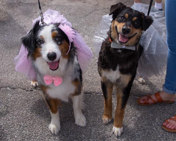 Apalach Mardi Gras Dog Parade