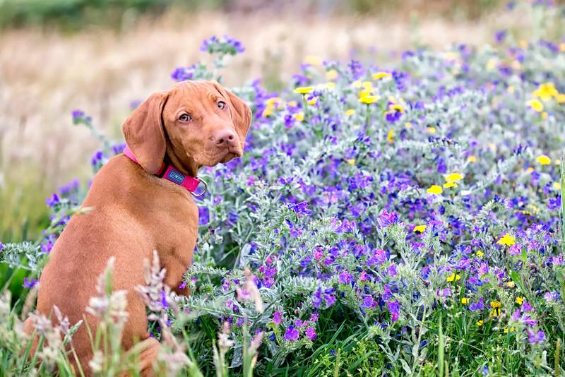 Dogs_Bosca_2014_FH0T7898.jpg