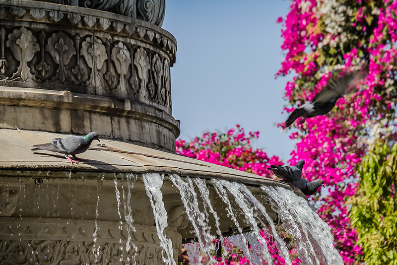 Fountain in Udaipur, India