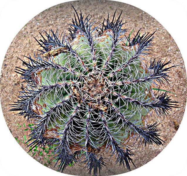 Pinwheel  San Jose del Cabo, Mexico