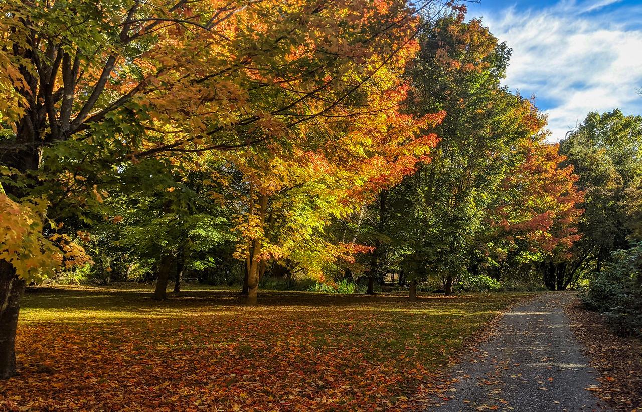 NZ Fall 1