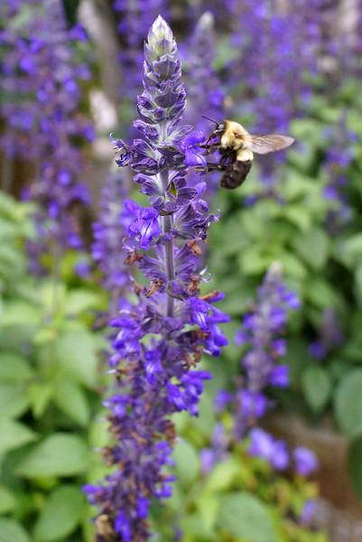 Summer @ Longwood Gardens With Sue 8-22-14