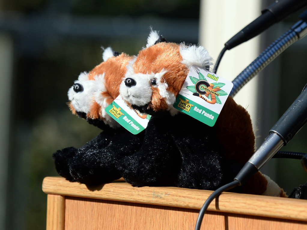 """. Stuffed red panda toys on display as Tenzing, a red panda, makes his debut in his new habitat at the San Francisco Zoo in San Francisco, Calif., on Wednesday, May 7, 2014. The 10-month old red panda was born at the Sacramento Zoo and was named after the framed Sherpa Tenzing Norgay, who scaled Mt. Everest in 1953 with Sir Edmund Hillary. Tenzing\'s habitat, called The Red Panda Treehouse was designed and built by Pete Nelson and his crew from the  Animal Planet television show \""""Treehouse Masters.\"""" (Dan Honda/Bay Area News Group)"""