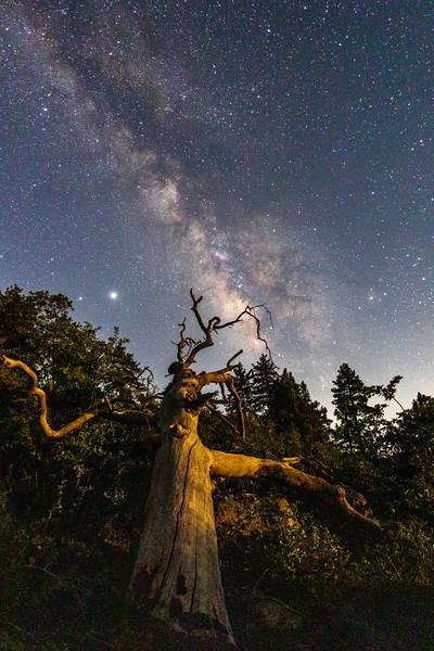 Twisted Tree.