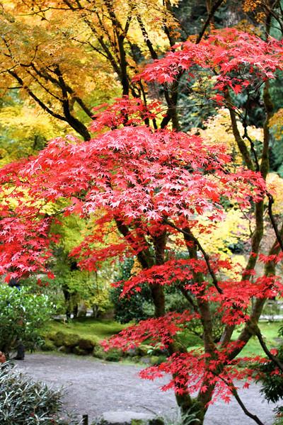 Portland Japanese Garden  11-11-11  3506.jpg