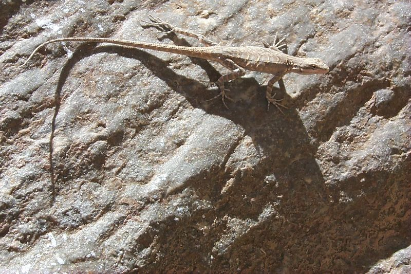 Lizard   (Jun 07, 1999, 03:04pm)