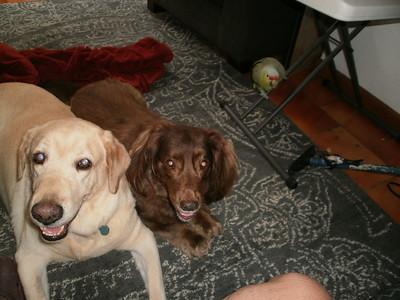 Naddy, Lucy & Oliver - Sabanilla - Pet Sitting
