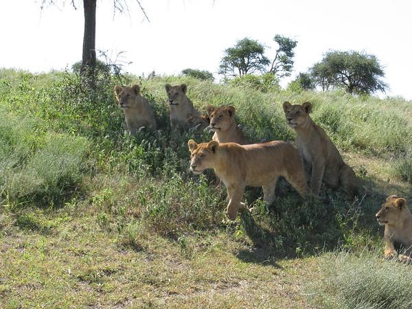 Ndutu Tanzania 2010