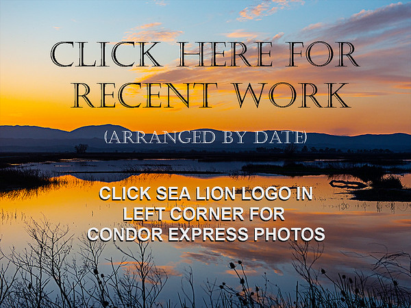 Recent  Trips -  not for Condor Express