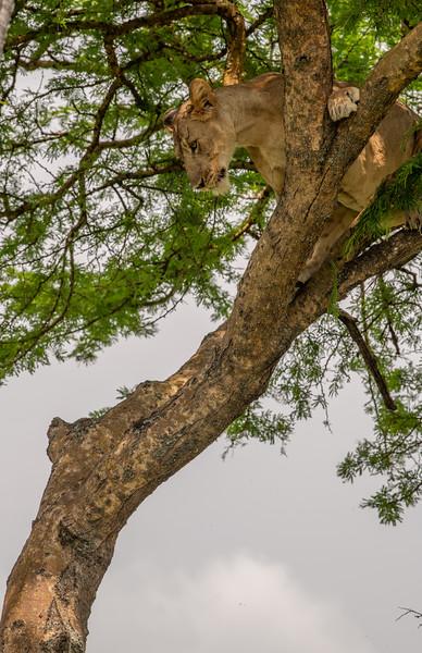 Uganda_T_QE-2109.jpg