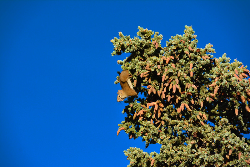 Denali-National-Park-67.jpg
