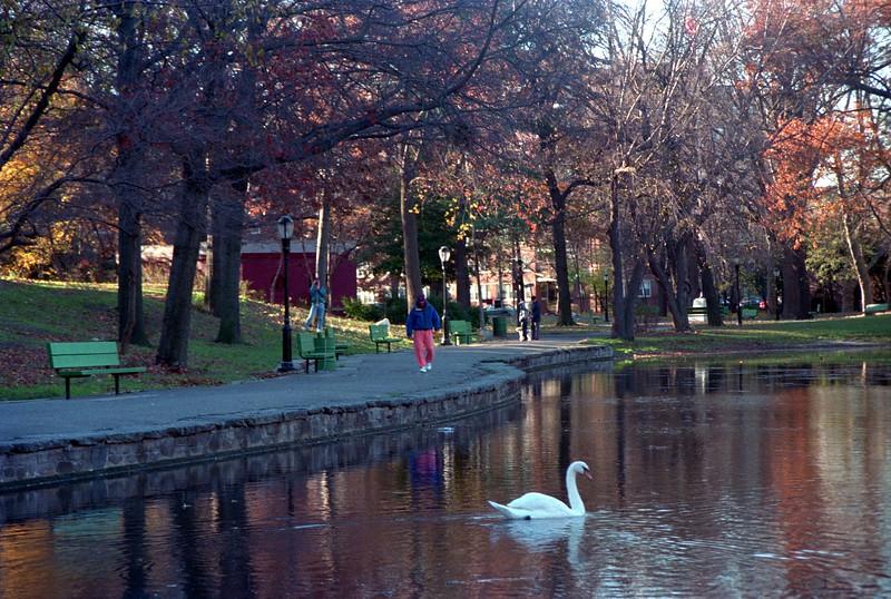 Guru Goose swan.jpg