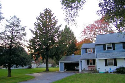 2012 Oct 23rd Tree  Down