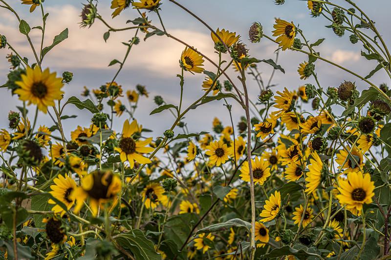 14_Flowers.jpg