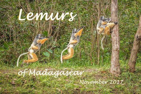 Lemurs of Madagascar