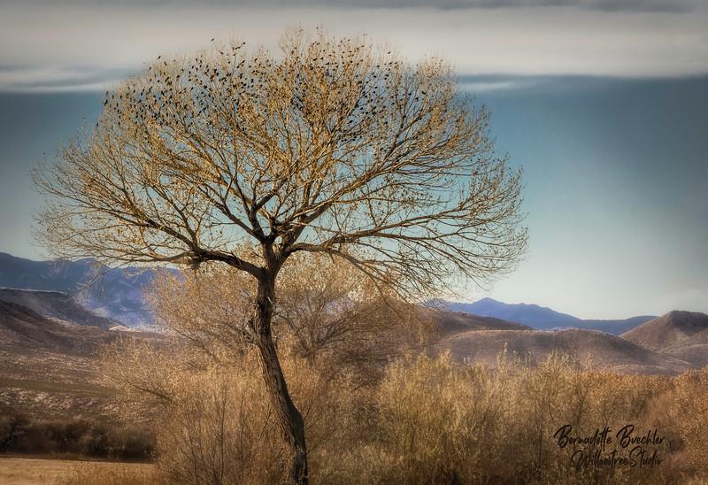 LONE TREE _ BOSQUE APACHE NATIONAL PARK, NEW MEXICO.jpg