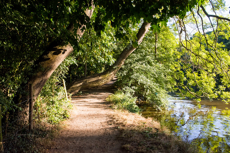 Thames Path at Goring