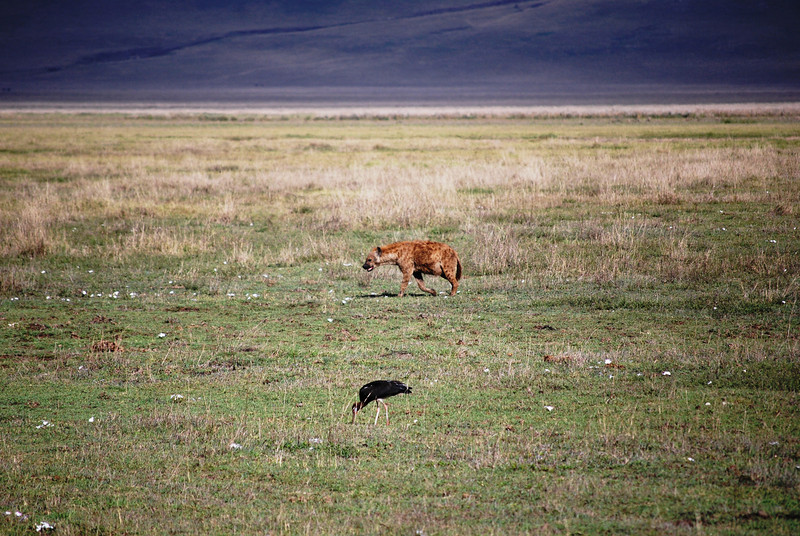 Ngorongoro (31).JPG