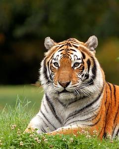 Maharaja Jungle Trek