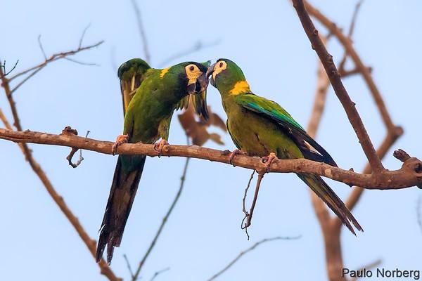 Pantanal Norte - 13 de janeiro de 2015