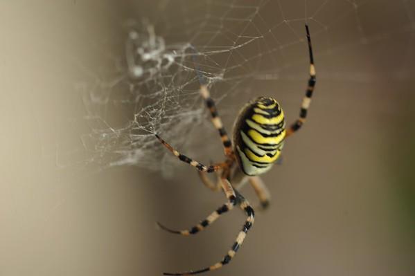 Arachn-idée