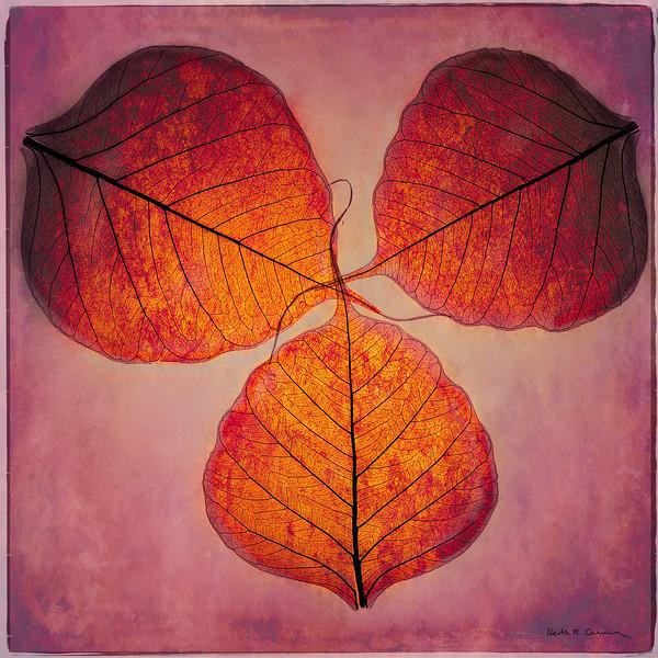 Three gold Bodhi leaves