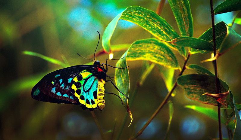 Butterfly-023.jpg