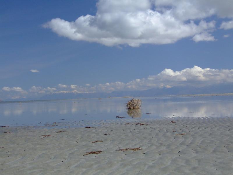 salt air (12).JPG