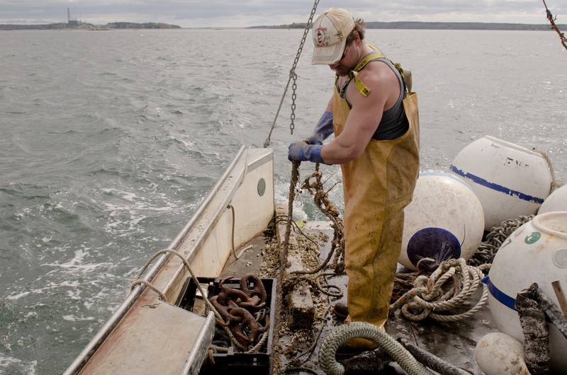 44. Setting moorings, pulling lobster traps, Casco Bay, Maine, May 2013.