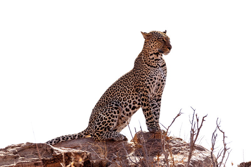Kenya 2015-00608.jpg