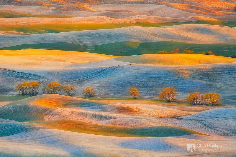 """""""Late Spring Snow, Palouse""""  A brief April snow storm created some unique conditions in the Palouse. Fresh snow is seen here, mixed in with freshly growing wheat, side-lit by the setting sun."""