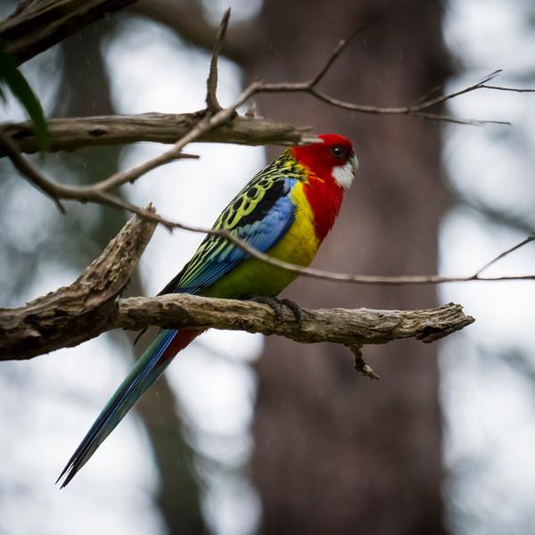 010519 Birds  _3.JPG