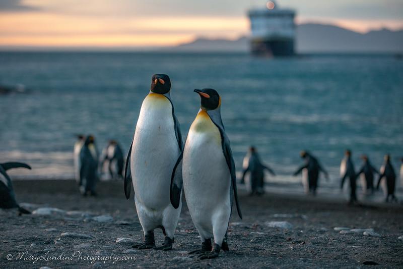 Antarctic-73