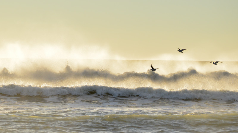 playing seaguls and waves-1.jpg