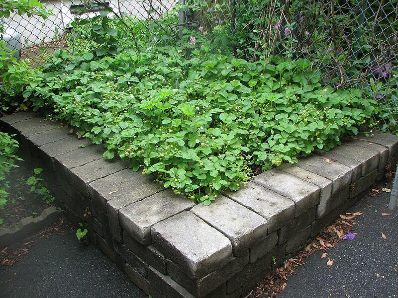 garden-2008-06-0635_std.jpg