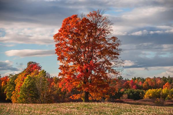 Four Seasons on Mill Pond Road
