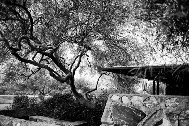 1-22-17218849Taliesin West - Frank Lloyd Wright.jpg