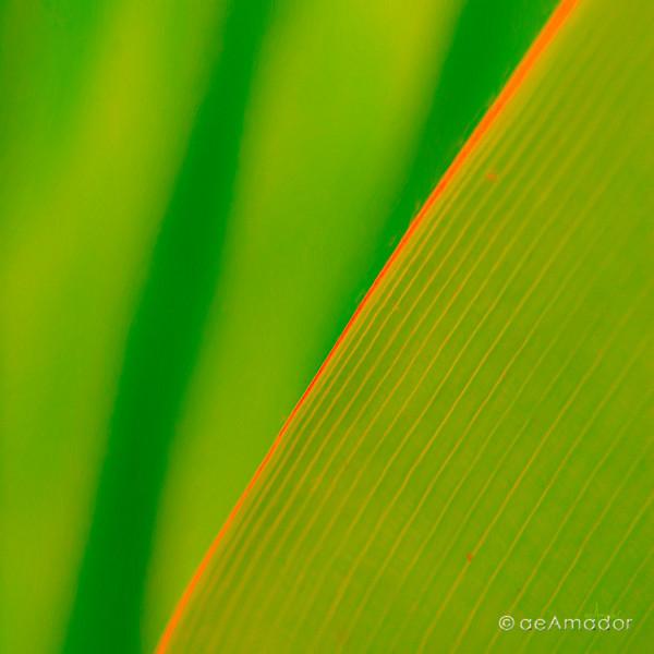Verde con Rojo 0251-aeamador.jpg