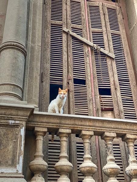 Scenes of Cairo