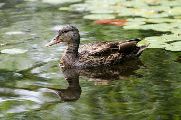Eastman Pond, Grantham NH, August 6 2020
