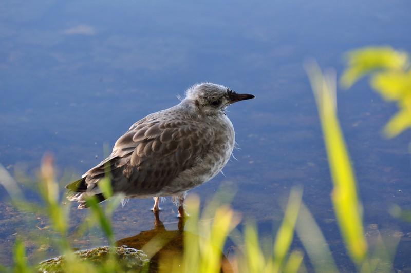 wildlifesweden (4).JPG