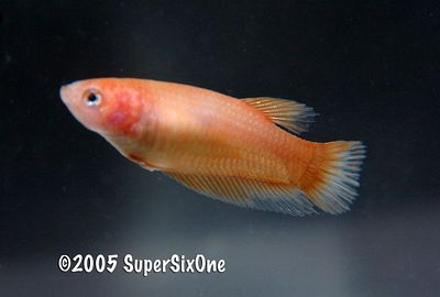 orange plakat female