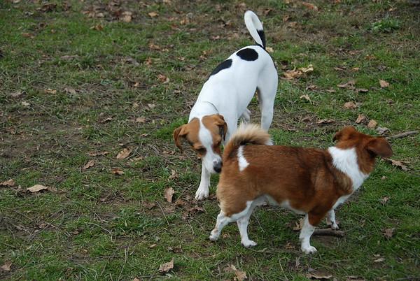 2011-11-27 Morris County Dog Park