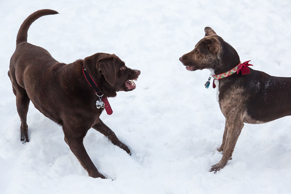 2017-01-07: Maddie & Ginny in the Snow