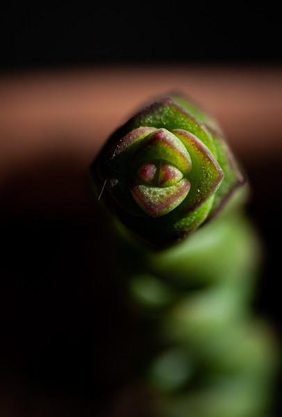 succulents 020220-1384.jpg