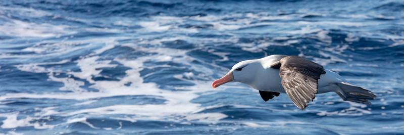 2019_01_Antarktis_00823.jpg