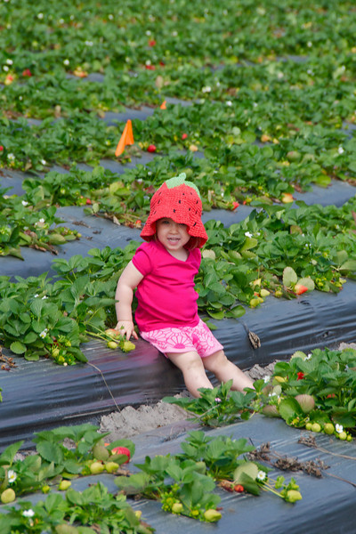 Oak Haven Farm Strawberries 2-20-11