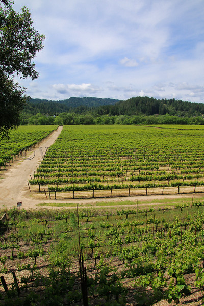 Wilson Winery 04242016