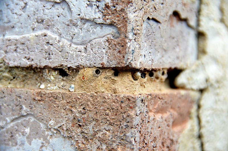 2012-8-3 ––– I thought I had holes in the mortar around my bricks, but on closer inspection, bugs had made nests from mud to lay eggs and the critters were hatching. Very strange.