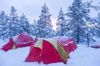 Wild Norway